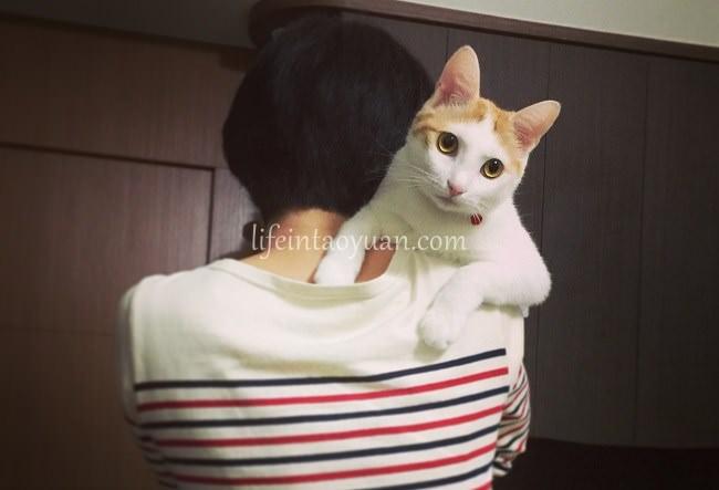 猫猫(maomao)ってこんな人
