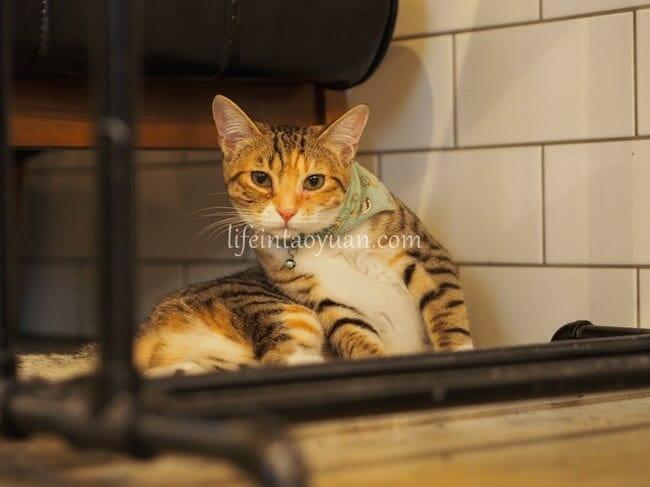 ネコ好きにはたまらない、可愛いネコ店長